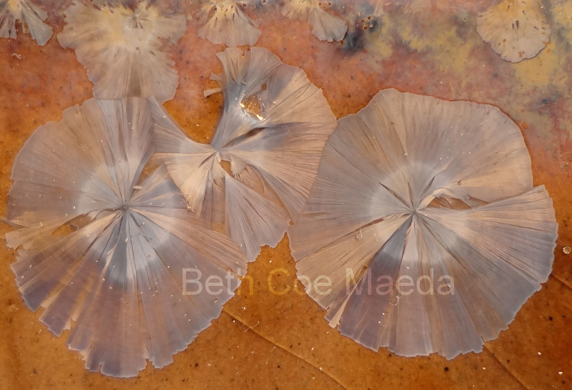 Detalhe de esmalte macrocristalino - crystalline glaze