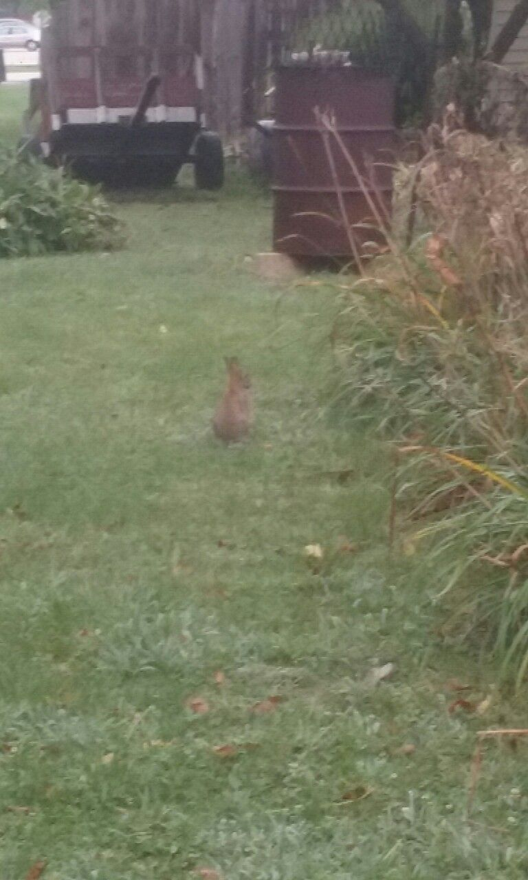 Bunny in my yard | Tree, Plants