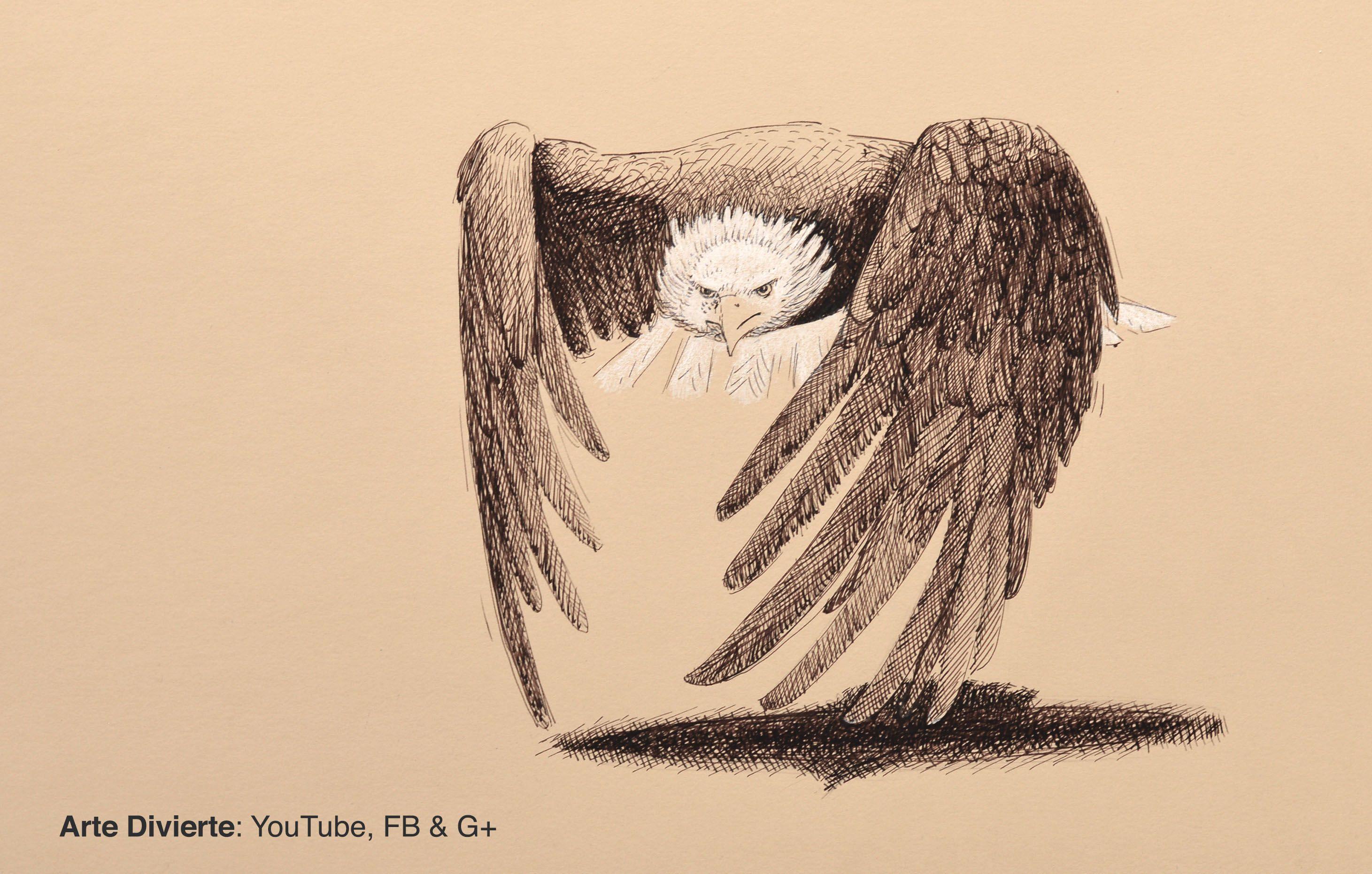 Cmo dibujar un guila de cabeza blanca con pluma fuente arte