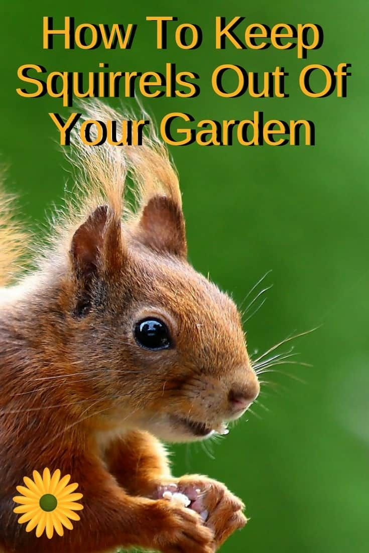 How to keep squirrels out of the garden with images
