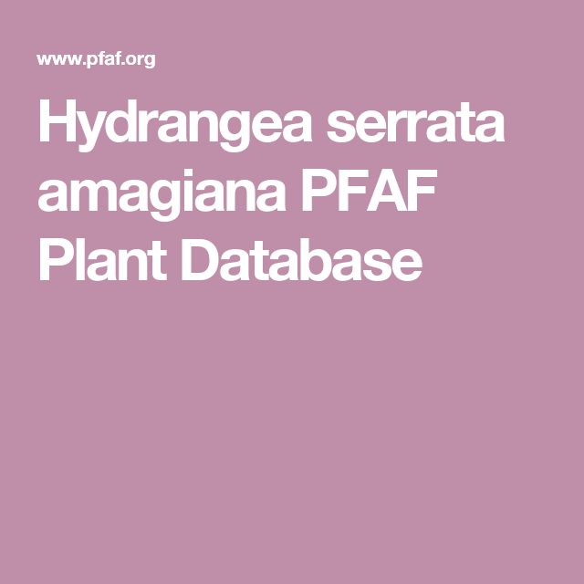 Hydrangea serrata amagiana PFAF Plant Database