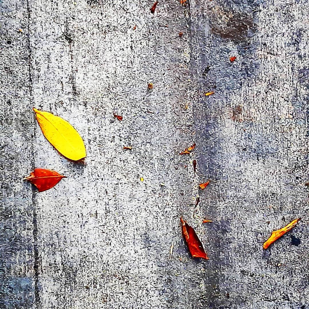 ES/PE/ROcaf'e#lifeinSeptember#YellowleafandRedleaf#ontheground#rthymofspace#form#color#lightandshadow#perfect#Artlovers#Architeclovers#photolovers#coffeelovers#catlovers#flowerlovers#skylovers#birdlovers#animallovers#travellovers#food#cake#garden#nature#city#oldtown#culture#streetfood#local#lifestyle#