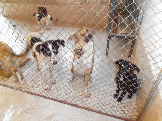 Кастрация на около 411 кучета в шуменския приют през 2012-та