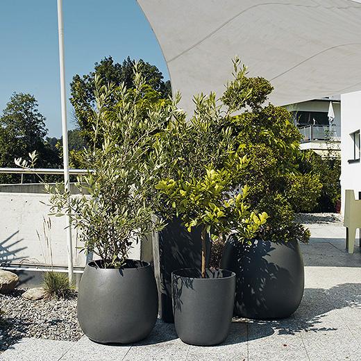 Swisspearl Pot Sumo In 2020 Pflanzen Garten Design Garten