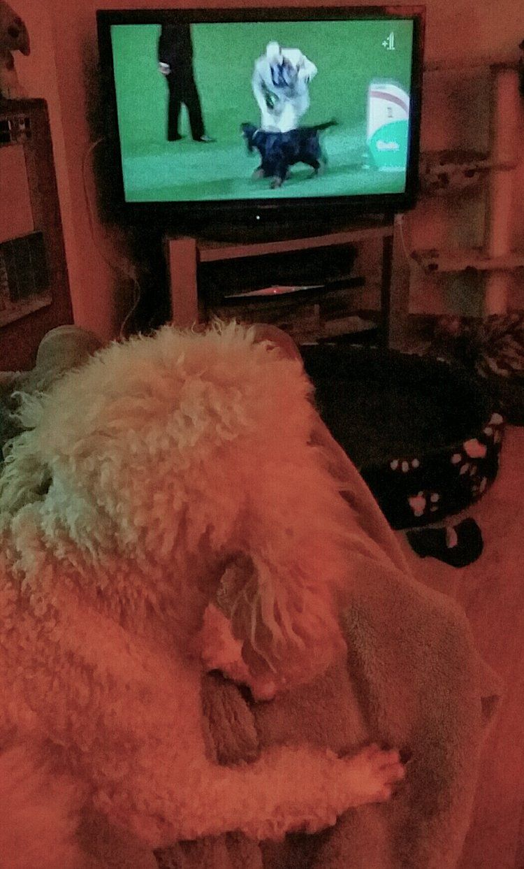 I D Like To Watch Animals On Tv In Peace Aggressive Dog Dog
