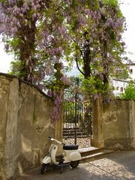 wisteria gate in #tuscany