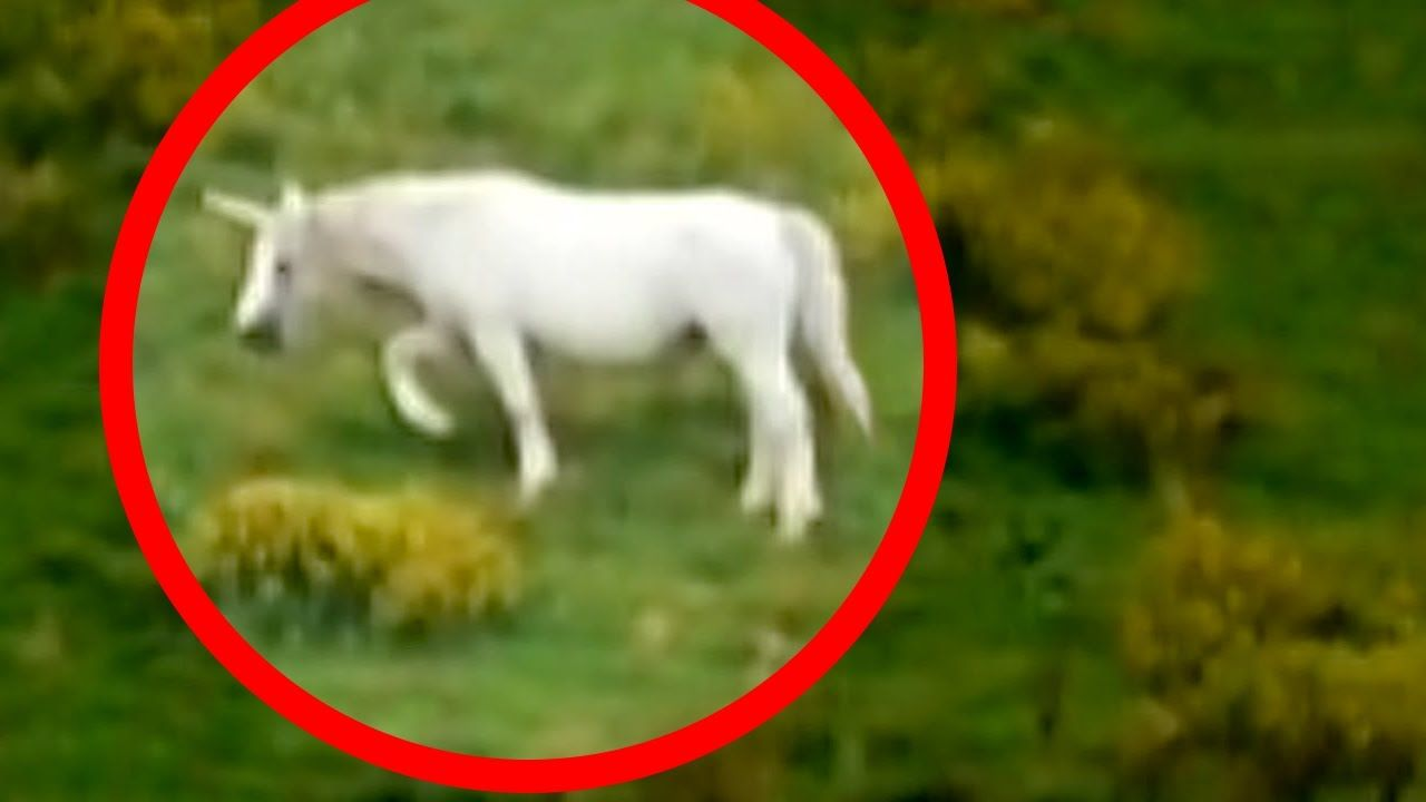 Unicorns Caught On Tape BEST UNICORN SIGHTINGS