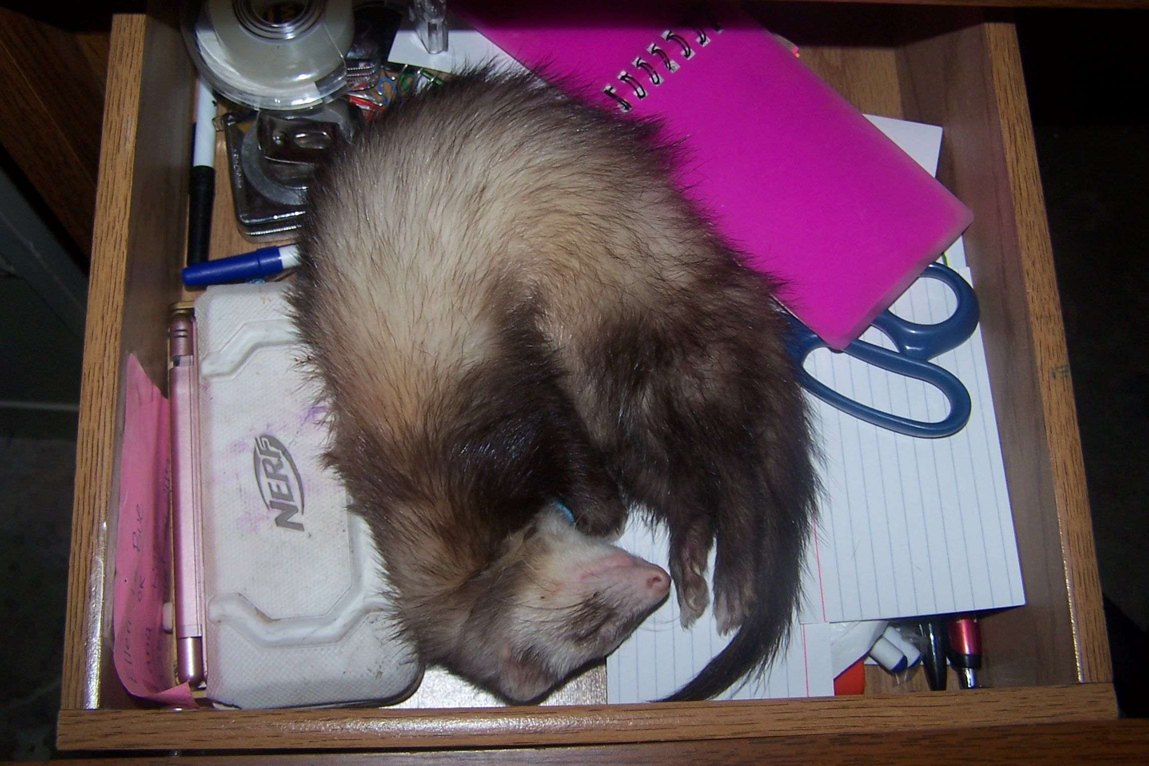 Daisy and her funny sleeping spots..