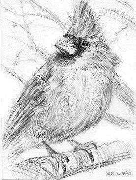 Drawing Sketch Bird Cardinals Pencil Animal Drawings Sketches Bird Sketch Bird Pencil Drawing
