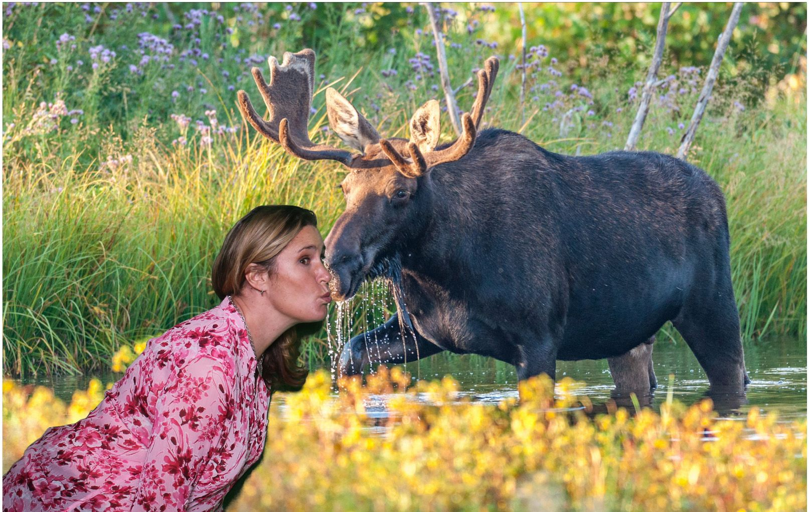 I kissed a moose and I liked it Photo booth company