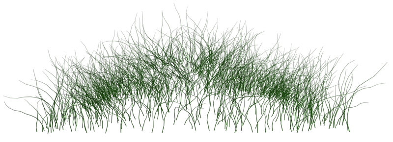 Grass 02 Png Plant Texture Water Plants Water Grass