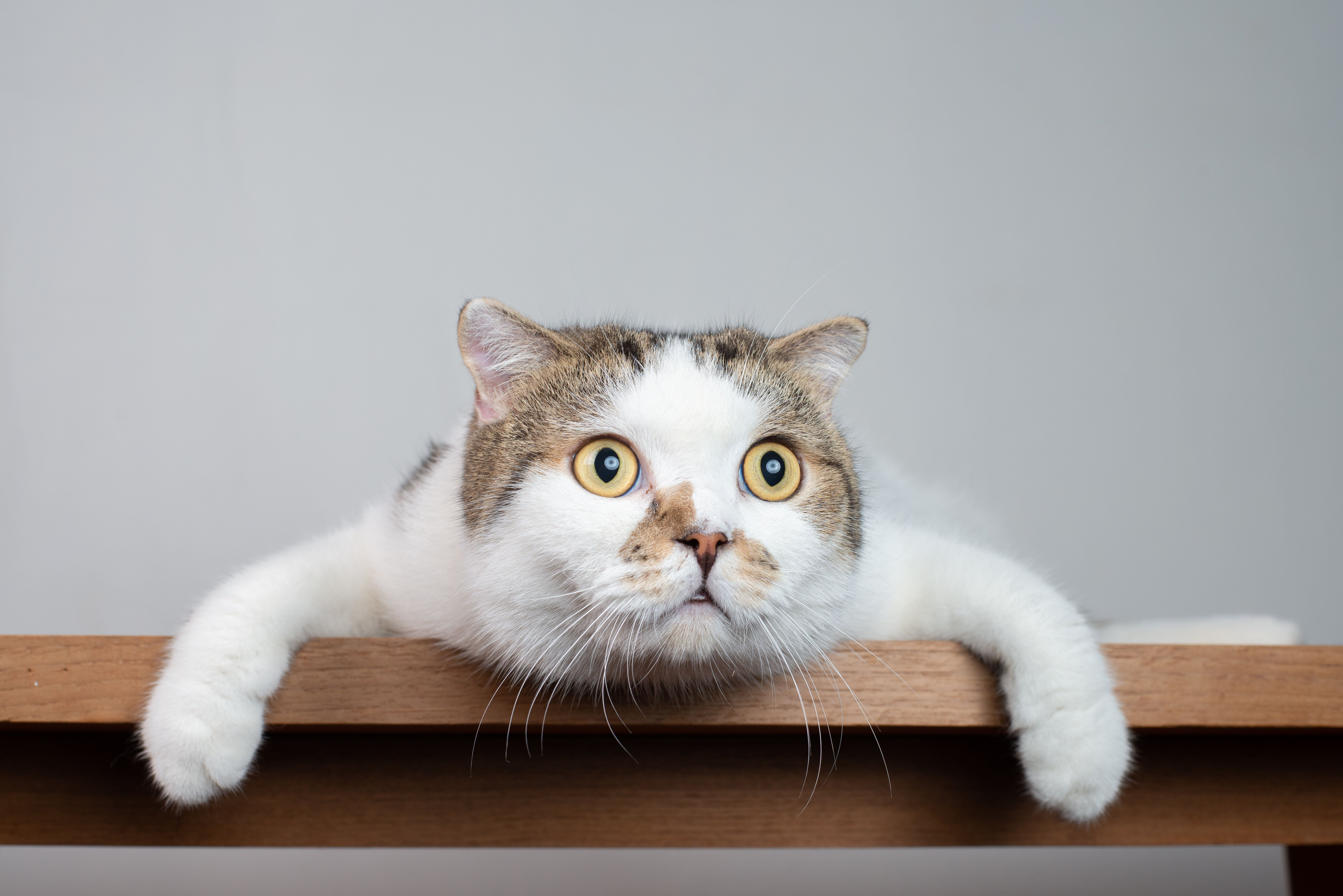 Top Cat Names Of 2019 Revealed Did Your Pet Make The List Cat Scottish Fold Cat Body Cats
