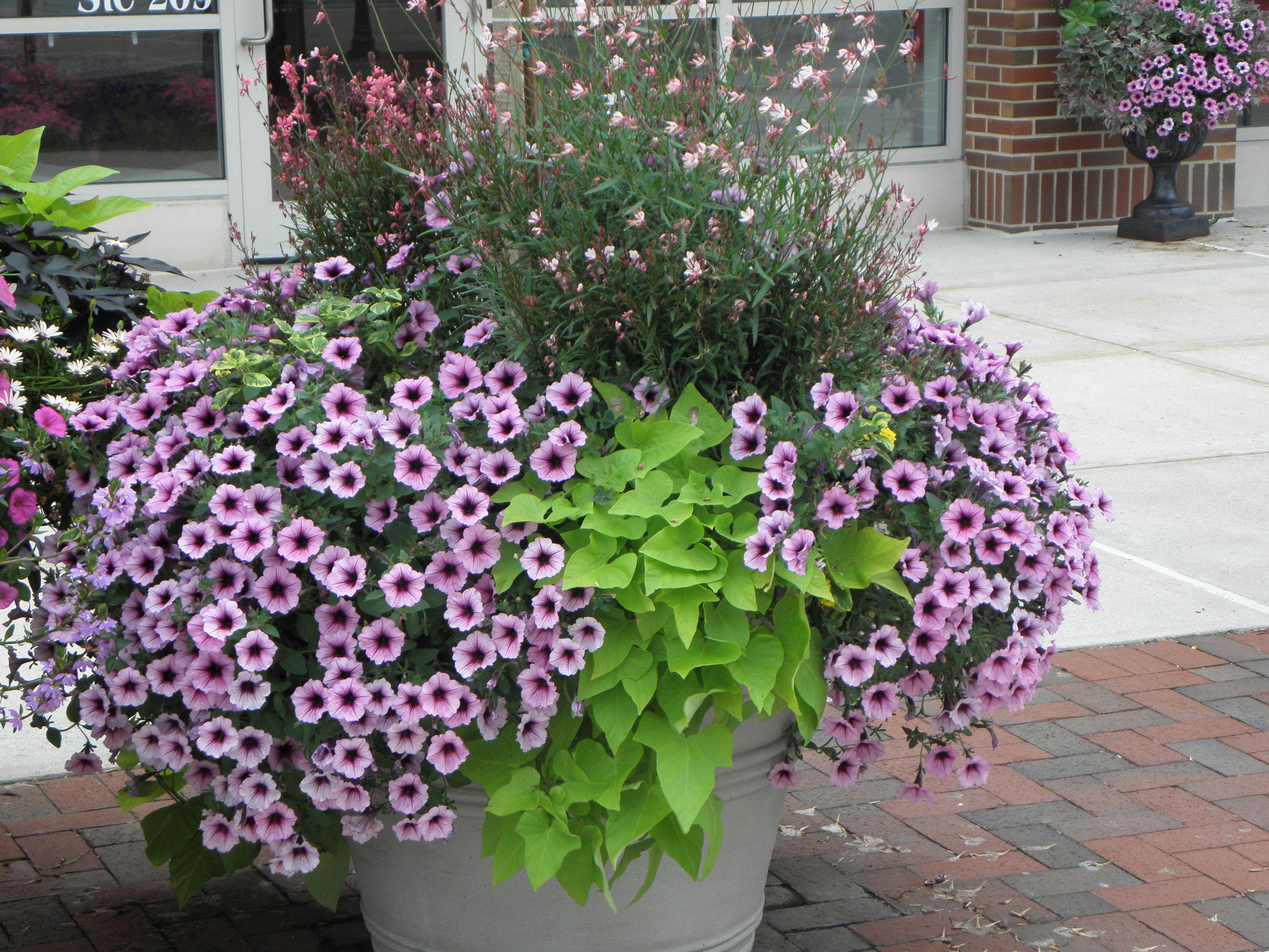 Seoane Landscape Design Garden Center Abington Massachusetts