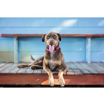 100 Loyal Faces Photography Pet Photographer Perth We Love Dogs Pet Photographer Face Photography Photography