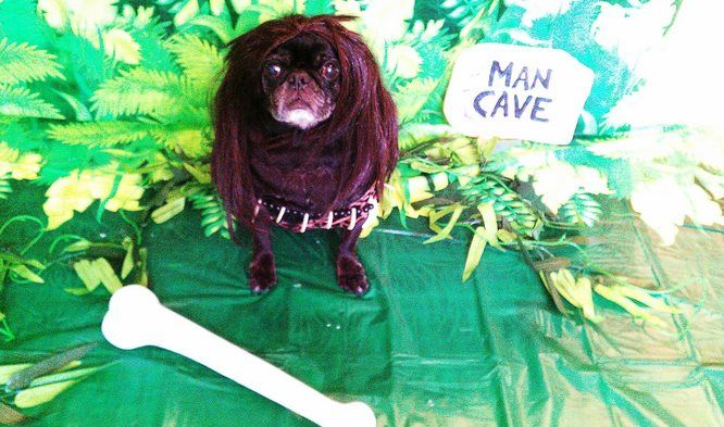 Cave Pug Entry 8 Halloween Dog Costume Contest Dogs