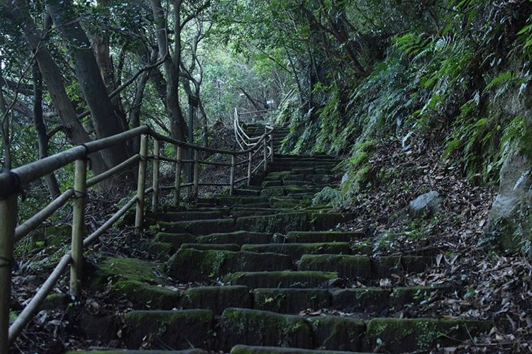 crooked and wonky hiking paths at the back of senganen  a little escape from the hustle and bustle of the city  #磯庭園 #仙巌園 #kagoshima #share_kago #senganen #hike #nature #traditional #travel #adventure #japan #鹿児島  #旅行 #日本 #ハイク #自然