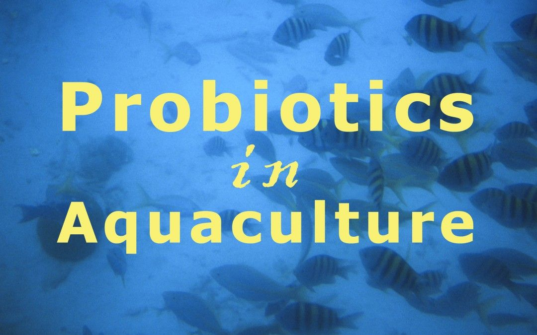 Use of Probiotics in Aquaculture – Does it Really Work?