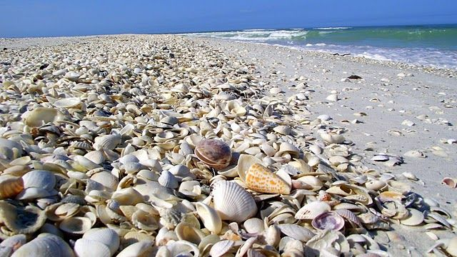 Tiger tail Beach of Marco Island FL - I would be in heaven looking through these shells!
