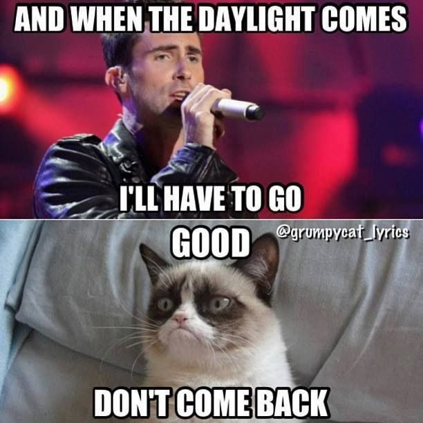 And Don't Come Back | FUNNY THINGS | Meme Gato, Cosas ...