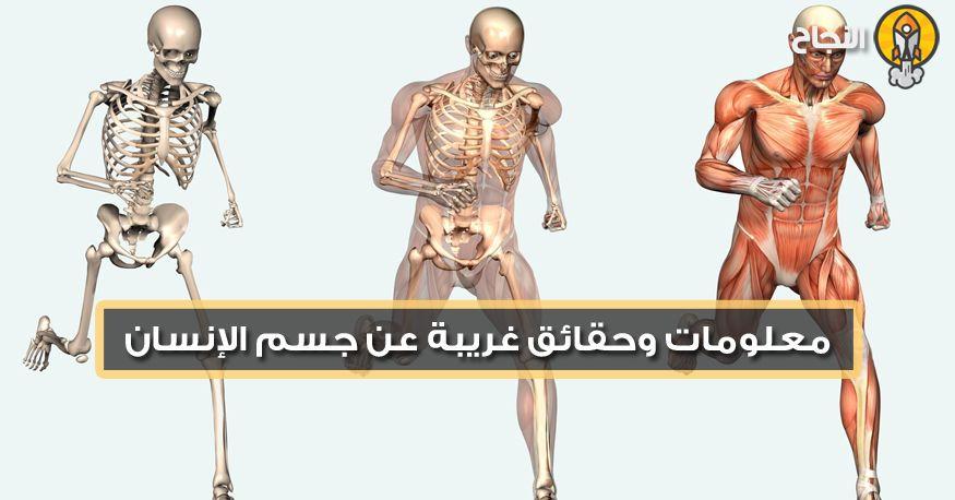 معلومات وحقائق غريبة عن جسم الإنسان Movie Posters Movies Poster