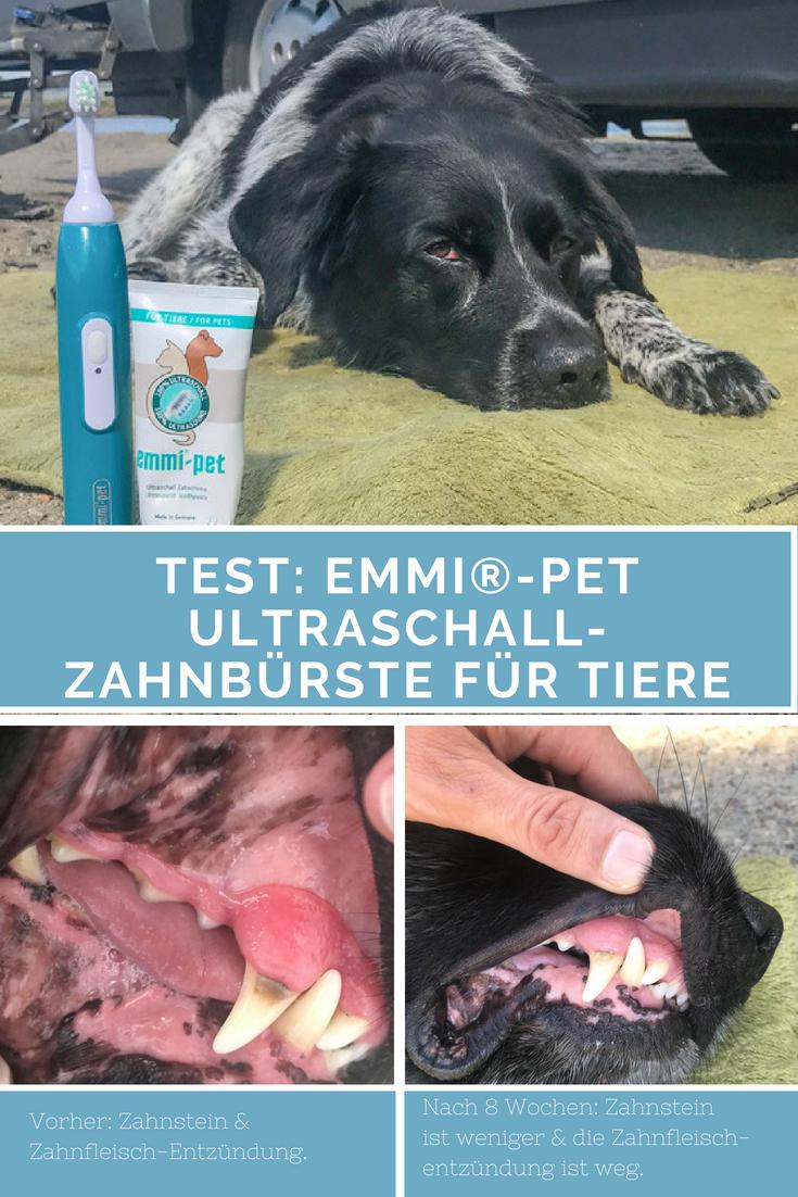 Im Test Emmi Pet Ultraschall Zahnburste Fur Tiere Werbung Zahnstein Hund Hund Zahne Putzen Zahne