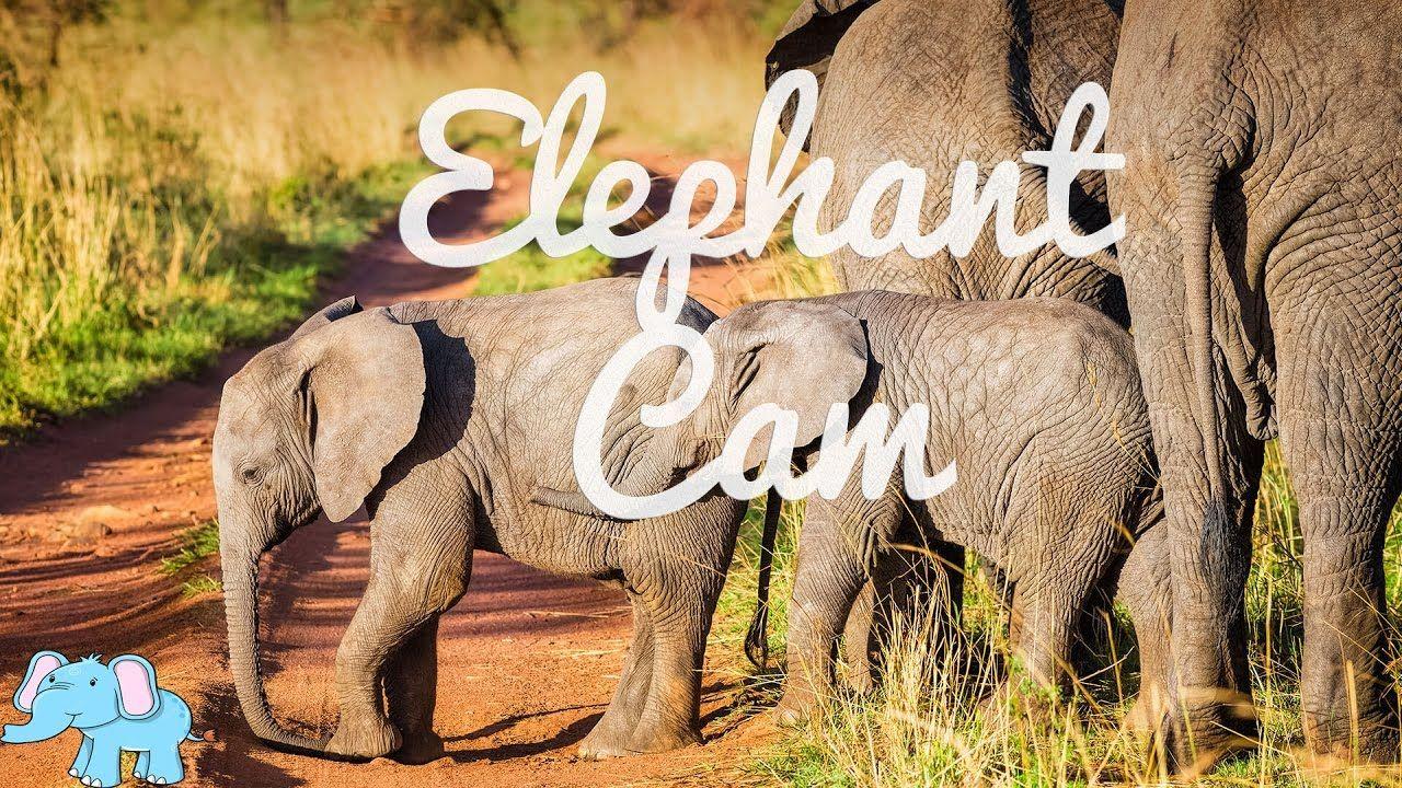 Animal Adventure Park Elephant Cam - San diego zoo kids