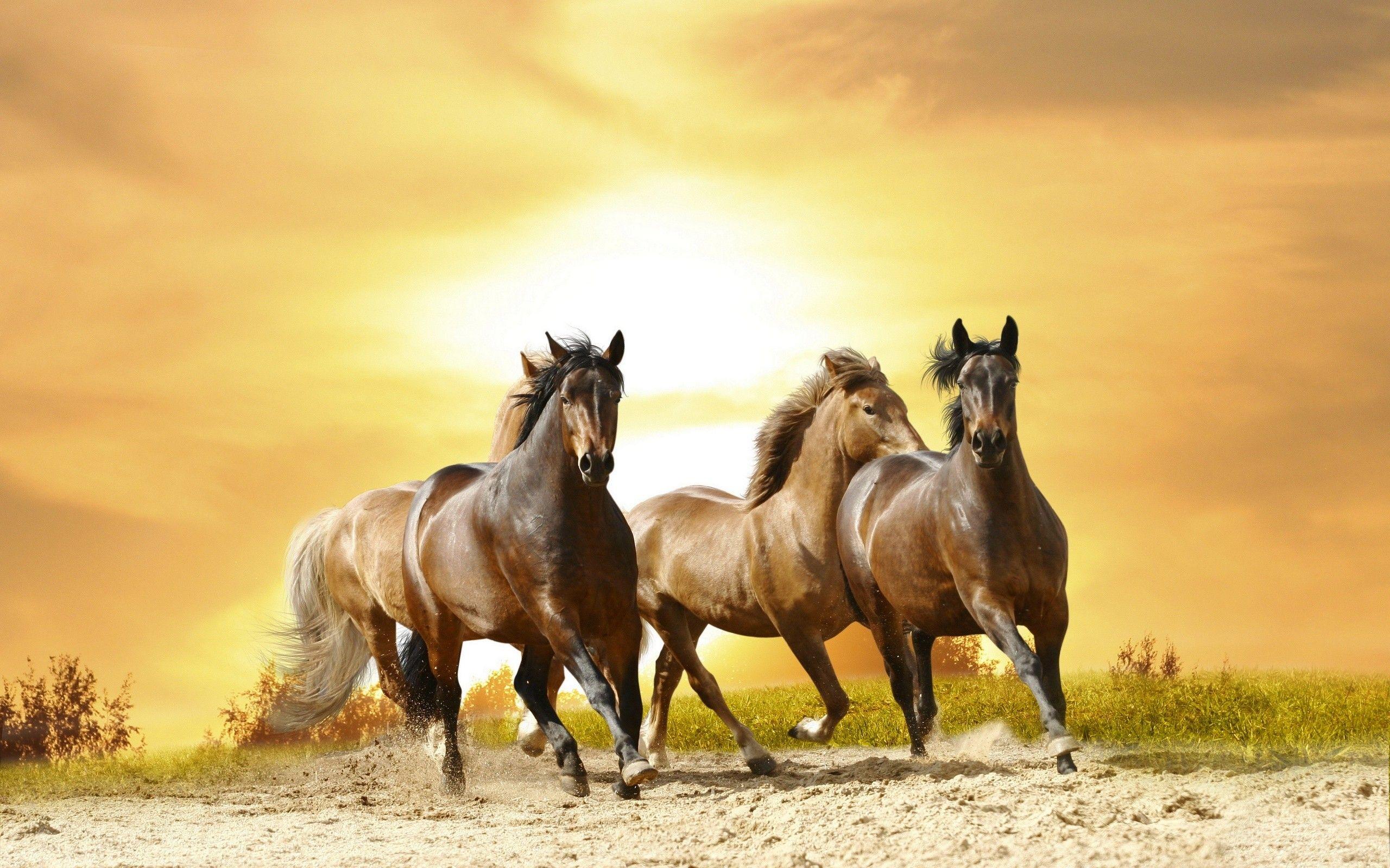 Beautiful Wallpaper Horse Yellow - 28b34f0ff898437167f92ce4aa7e49f9  Graphic_644964.jpg