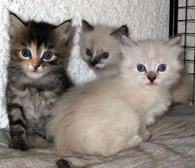 Manual do Gatos