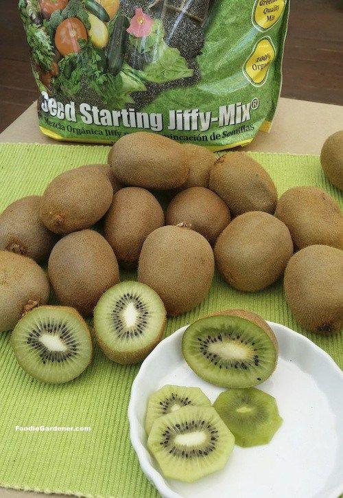 How To Grow Kiwi From Store Bought Kiwi Fruit Kiwi Growing Grow Kiwi From Seed Kiwi Fruit