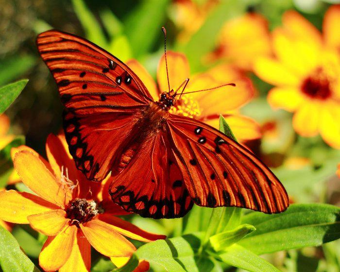 Butterfly in the Garden by Heather Owen