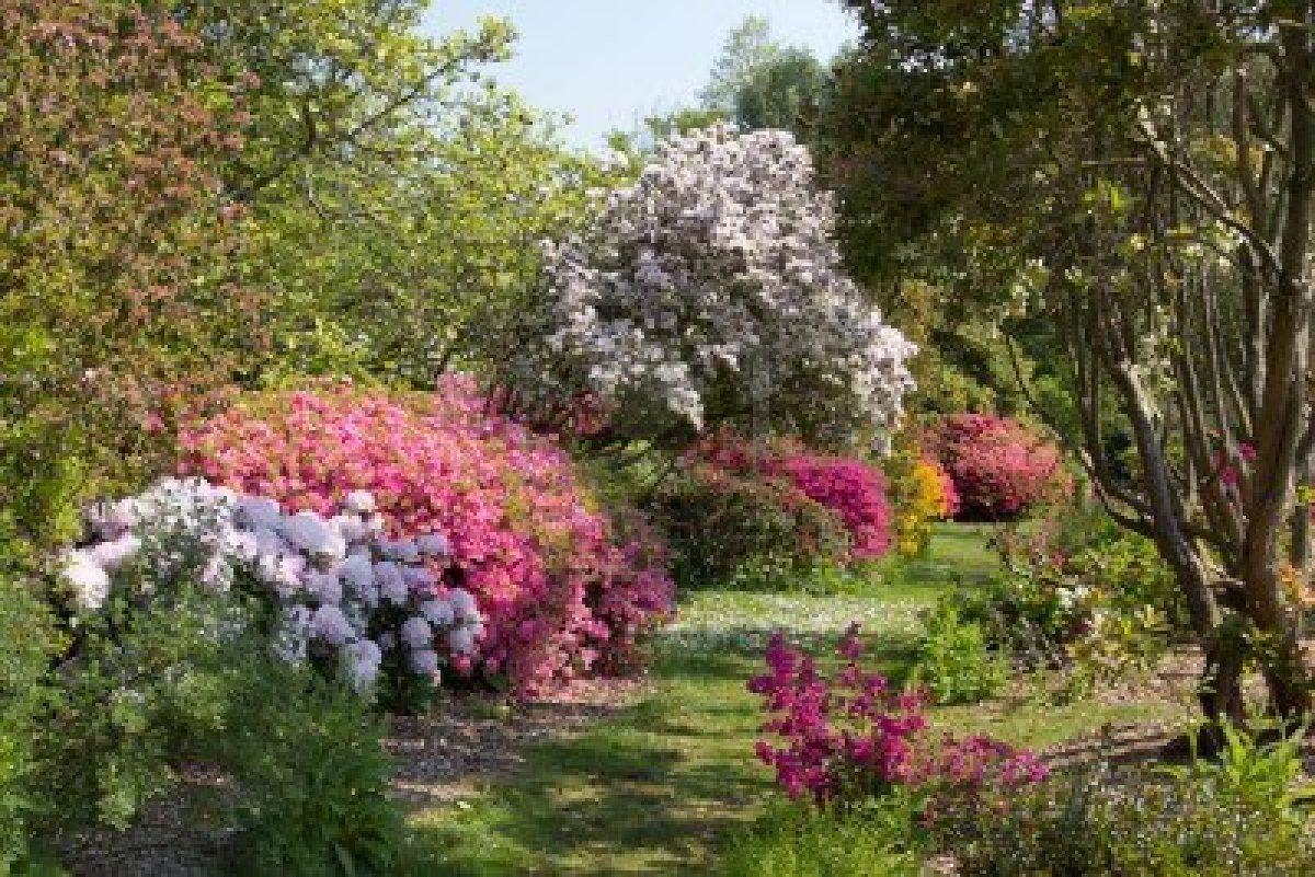 Furzey jardin anglais au printemps banque d 39 images for Jardin paysager anglais