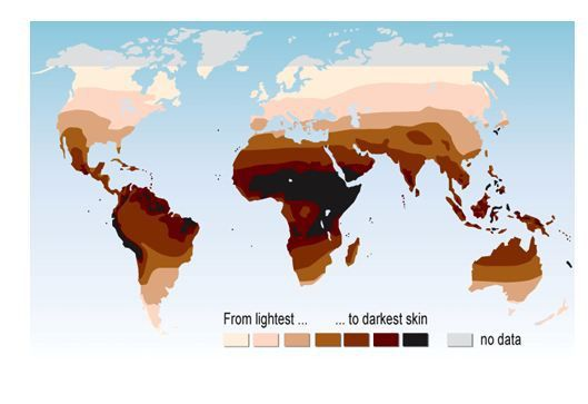 The Secret Science Of Melanin And Transformation The Meta Center Skin Color Color Race Skin Tone Chart