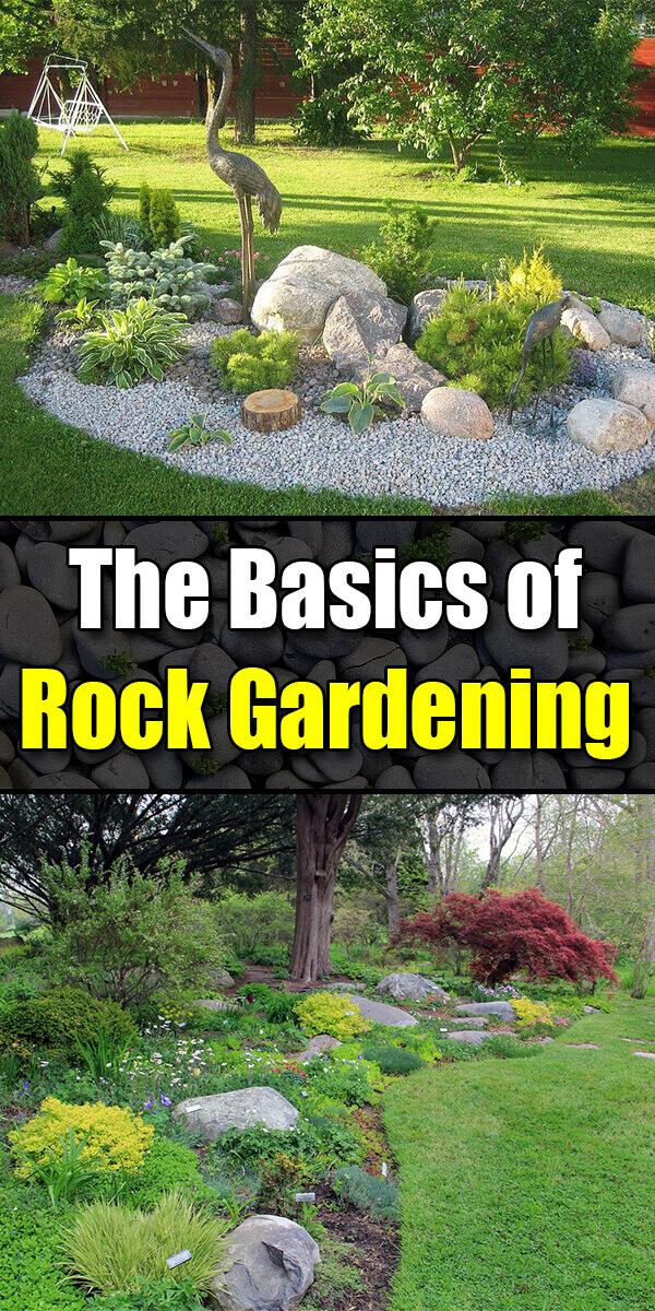 Le Basi Del Giardinaggio Rock In 2020 Rock Garden Plants Rock Garden Landscaping Rock Garden