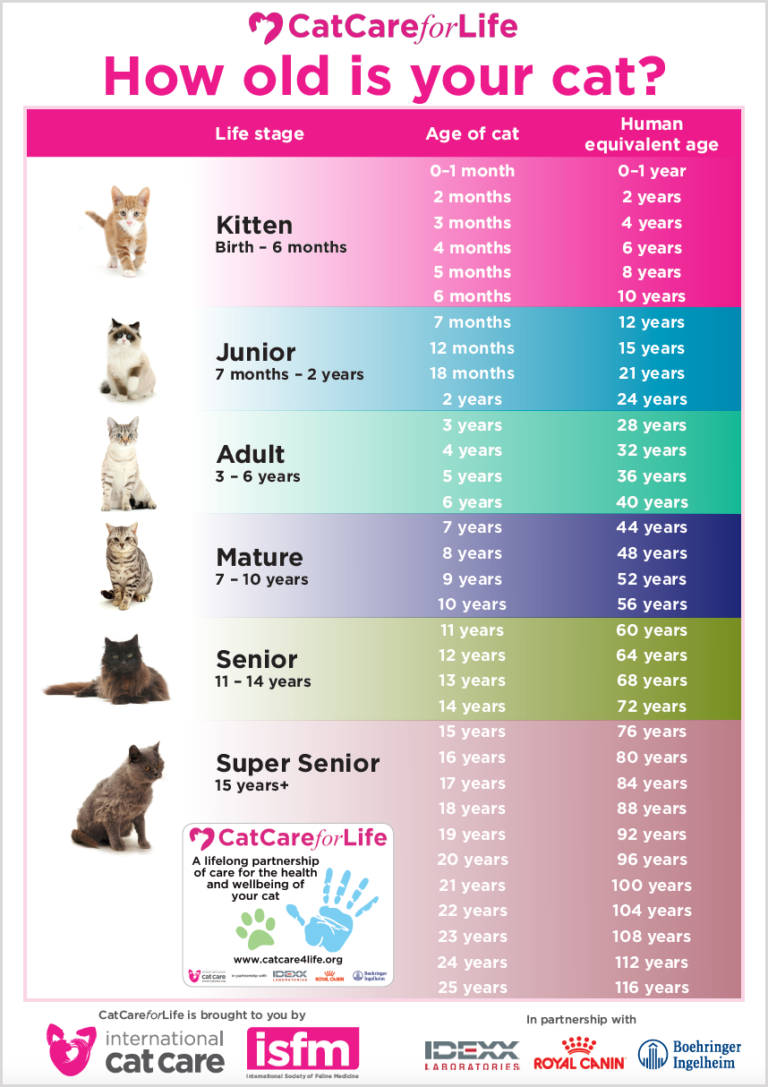 How To Tell Your Cat S Age In Human Years International Cat Care Cat Ages Cat Years Cat Age Chart