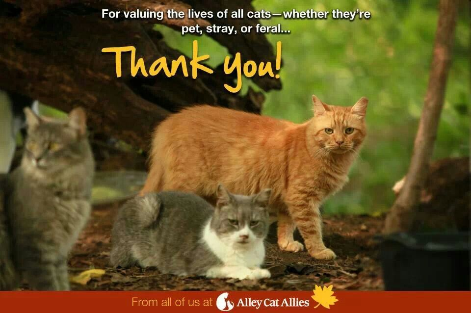 Thank you! Alley cat allies, Cat facts, Pets