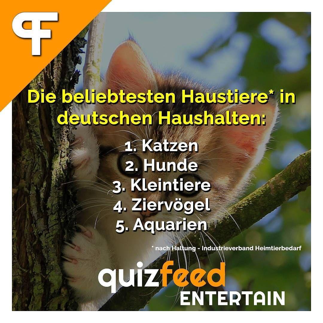 Die beliebtesten Haustiere in deutschen Haushalten: 1. Katzen 2. Hunde 3. Kleinvögel 4. Ziervögel 5. Aquarien. Wissen clever verpackt!