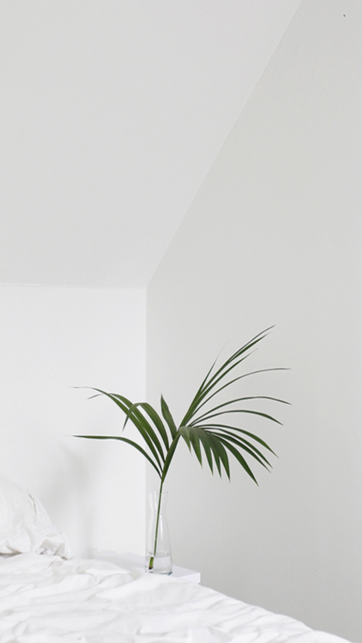 Pin by kiddgnarly on iPhone wallpapers Plant wallpaper