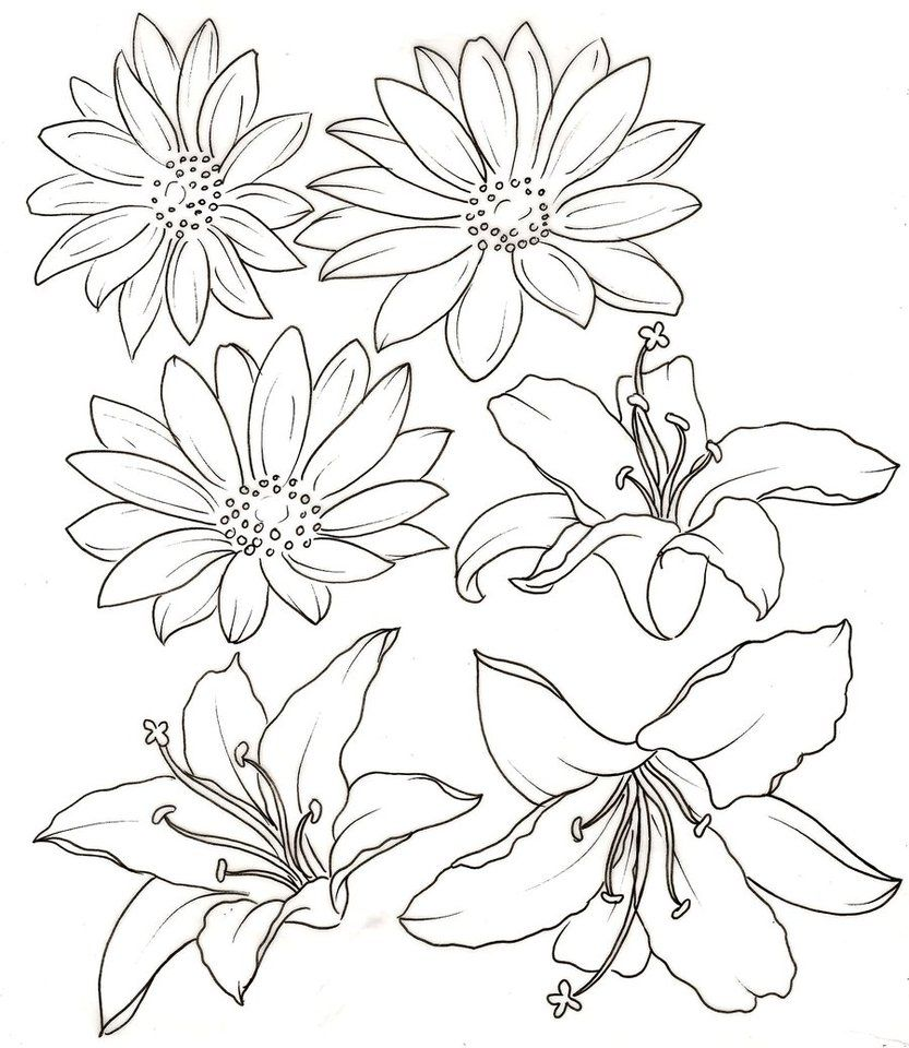 Daisy Tattoo Outline: Lily And Daisy Tattoos By ~Metacharis On DeviantART