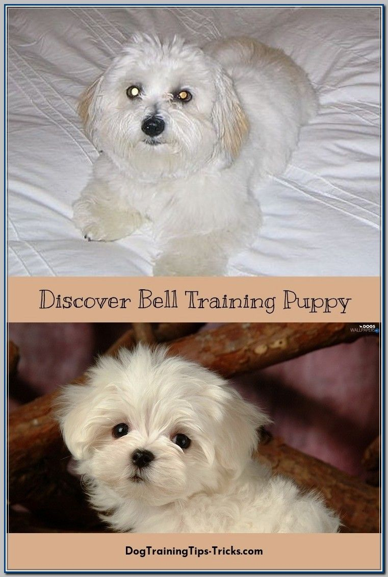 Ways To Use Bell Training For Puppies Bell Training Puppy