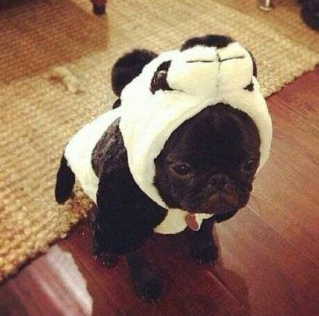 Not A Happy Camper Why Yall Gotta Dress Up Your Pets Arent They Cute Enough As Are And Most Of Them HATE Being Put Into Costumes Clothes