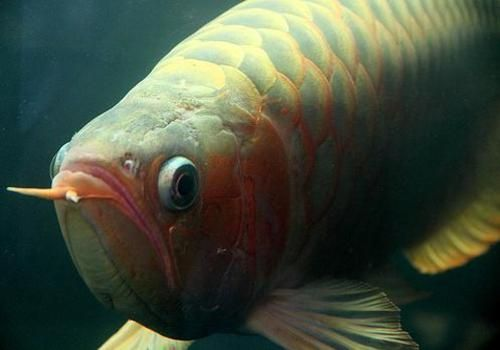 Best Types Of Pet Fish Caring For The World S Most Expensive Pet