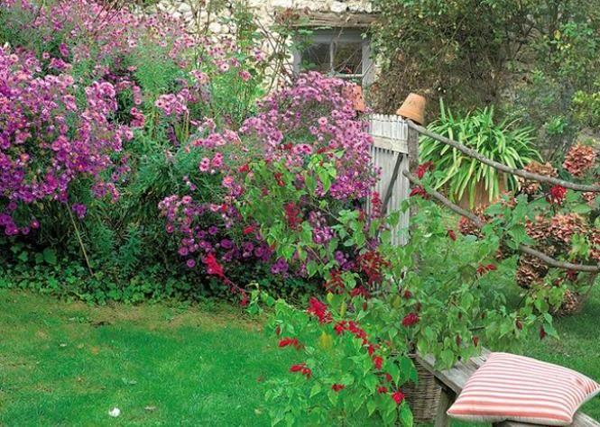 Des asters pour l\u0027automne - Ou Trouver De La Terre De Jardin