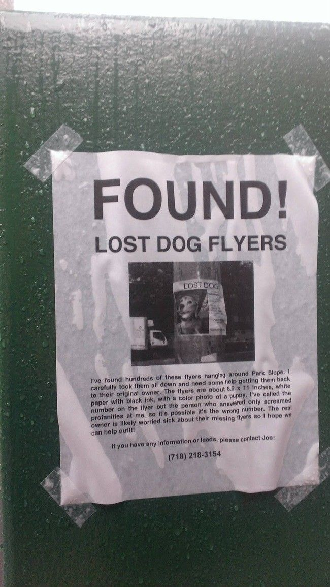 Found! Lost dog flyers #lol Humor Pinterest Funny signs - lost dog flyer examples