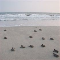 ADOPT-A-NEST - Turtle Central