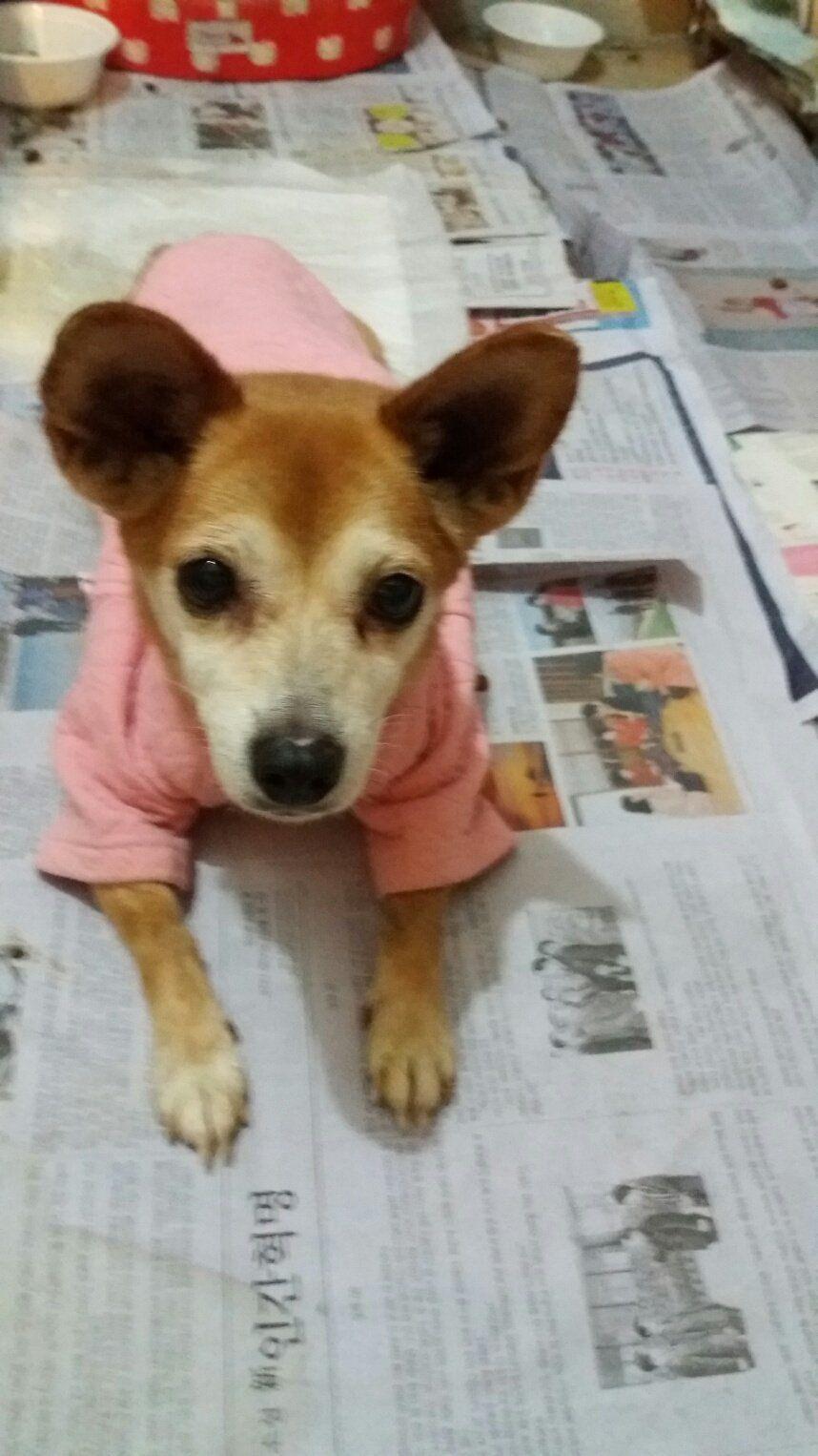 Adopt Shiba On Shiba Inu Dogs Shiba