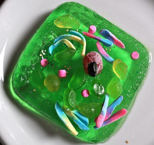 How to Create 3D Plant Cell and Animal Cell Models for ...