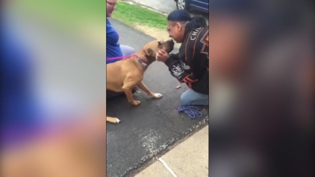 Dog Reunited With His Human After Two Years Is The Perfect Pick Me Up Kicked In The Groin Winnebago County Most Watched Videos