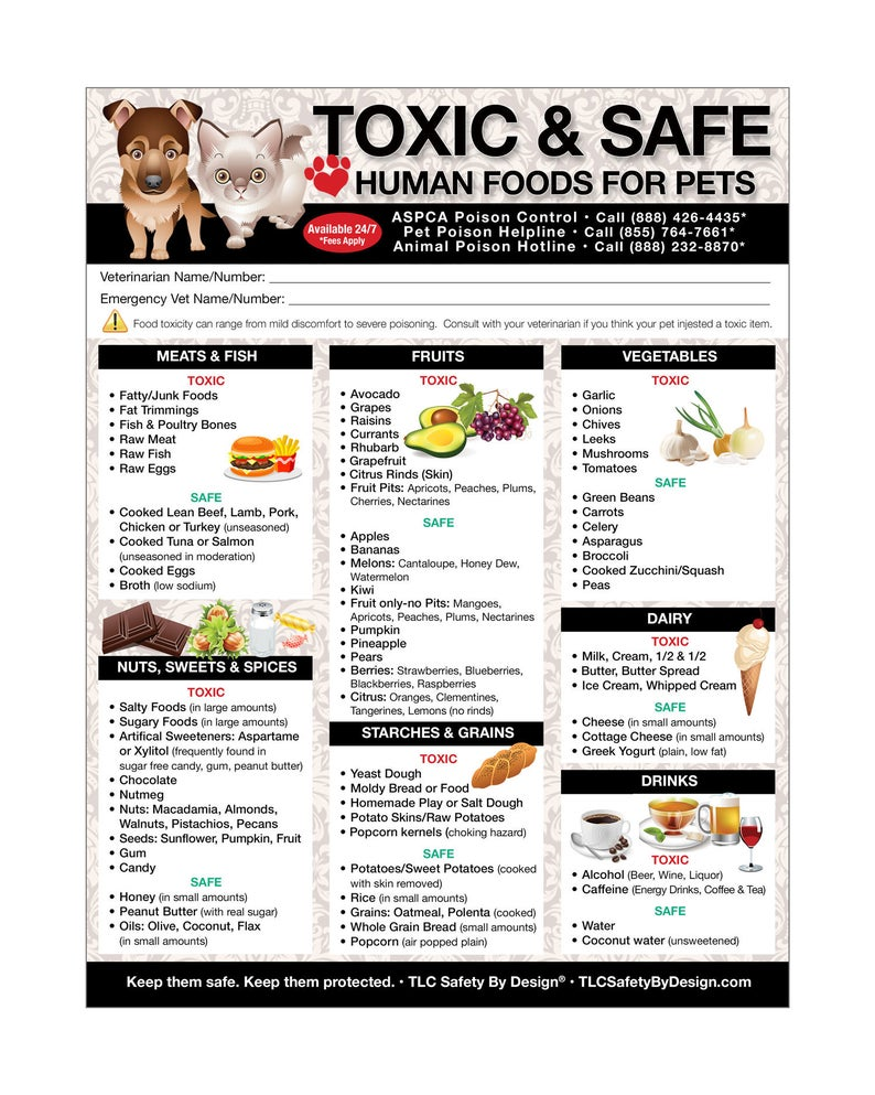 Premium Toxic And Safe Foods Large Format 8 X10 5 Etsy In 2020 Toxic Foods For Dogs Foods Dogs Can Eat Dog Safe Food