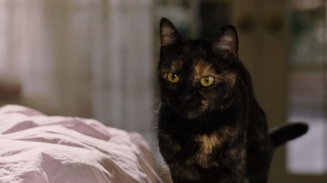 Bewitched 2005 Bewitching Cats Tortoiseshell Cat Names