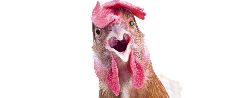 InfoNavWeb                       Informação, Notícias,Videos, Diversão, Games e Tecnologia.  : 50% de frango do Subway não é frango, aponta análi...